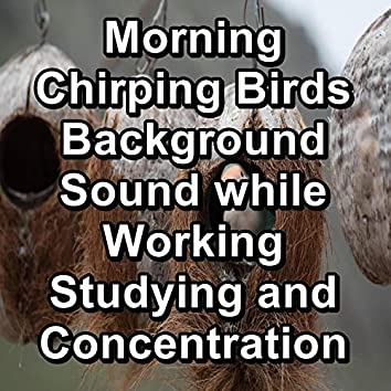 Morning Chirping Birds Background Sound while Working Studying and Concentration