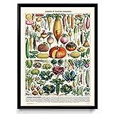 Gemüse Illustration Vintage Print 1–Gemüse