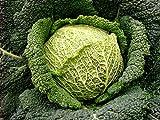 Seeds Savoy Cabbage...image