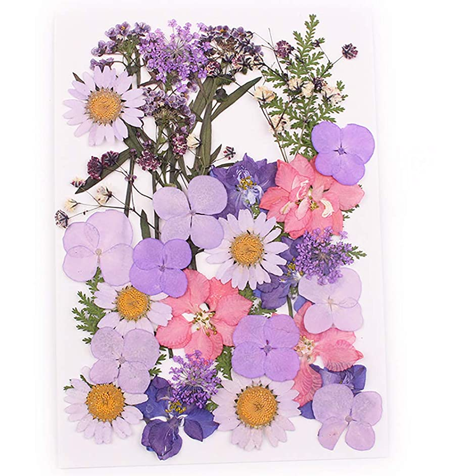 Natural Dried Flowers Combination DIY Pressed Herbarium Flower Decorative for Resin Jewelry Crafts Nail Stickers (E)