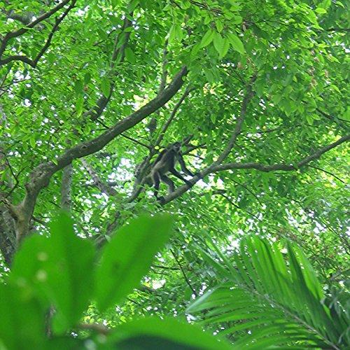 2420 Chaguantique Nature Reserve, El Salvador Titelbild