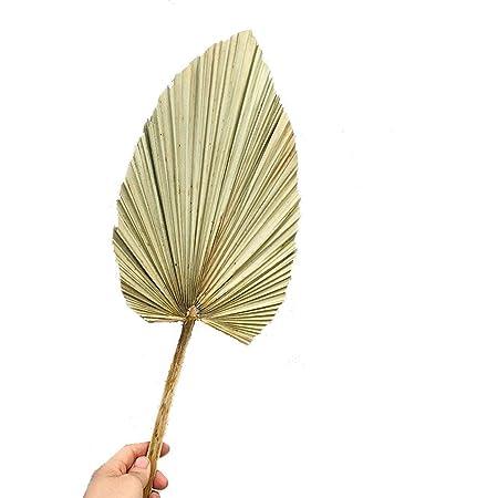 /Éventail naturel de palmier s/éch/é Brandless Luofus D/écoration murale Plante de bricolage D/écoration de mariage