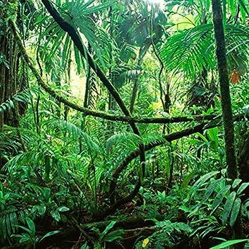 Jungle Dippin'