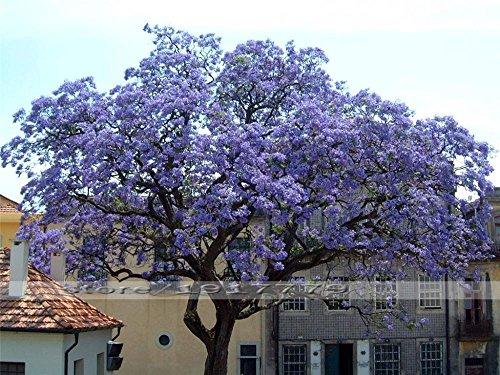100seeds / sac à double bulbe lys plantes à fleurs d'intérieur fleur en pot pot boule parfum graines lily lily