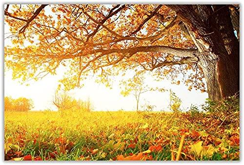 Hermoso otoño sol paisaje estampado de pared cartel arte decoración del hogar cuadros tamaño 59.4cm x 42cm