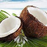 アロマフレグランスソルト ココナッツ(Coconut)
