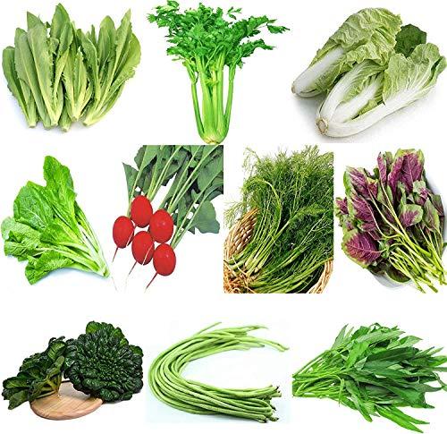 Gartengemüse Grün Bio Chinesische Samen 10 verschiedene Sorten Menge 8000+ zum Pflanzen im Freien zum Kochen von Geschirrsuppe Geschmack Gut Lecker (10 Sorten-B)