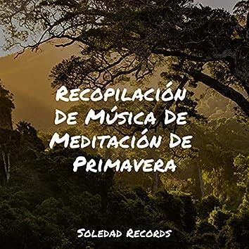 Recopilación De Música De Meditación De Primavera