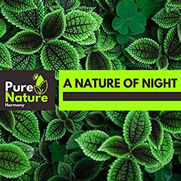 A Nature of Night