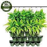 Worth Garden 12 Set fioriera da Parete piantatrice a Parete 2 piantatore sospeso per Balcone Cortile...