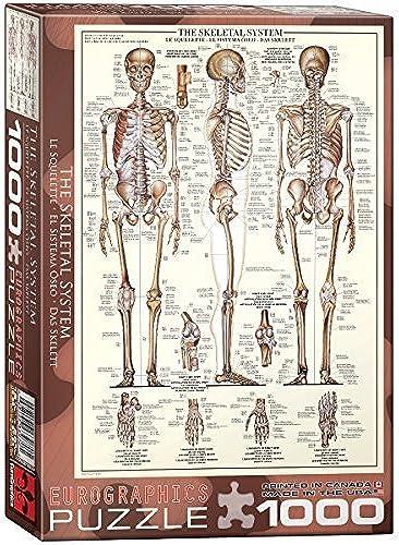 descuento Skeletal System (Chart) (Chart) (Chart) - 1000 Piece Puzzle by EuroGraphics  compra en línea hoy