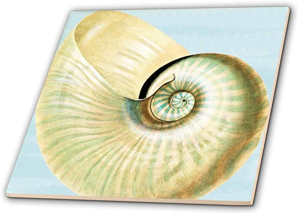Colorado Springs Mall 3dRose ct_63637_1 Beautiful White Seashell Beach Themed Now free shipping Cera Art