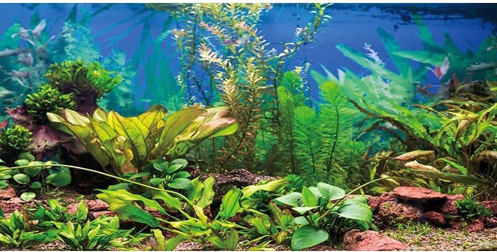 AWERT Aquarium Background High quality Dealing full price reduction Aquatic Plant Lake Ta River Fish Bed