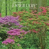 Delaware Wild & Scenic 2020 12 x 12 Inch Monthly Square Wall Calendar, USA United States of America Southeast State Nature