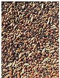 25lb Whitetail Deer Food Plot Seed | Turnip Radish Clover Wheat Rye Mix | Branson's Buffalo Blend