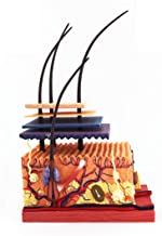 Skin Model, Magnified Anatomical Model, Used for Scientific Classroom Learning to Show Teaching Medical Model,(12Cm * 11.8...