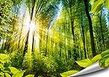 ARTBAY Wald Poster XXL - 118,8 x 84 cm | EIN von Sonne