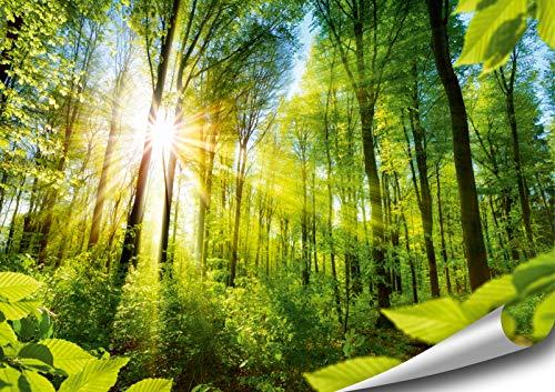 ARTBAY Wald Poster XXL - 118,8 x 84 cm | EIN von Sonne durchfluteter, Zauberhafter Wald | Natur Poster |Premium Qualität