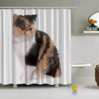 YOLIYANA Tricolor Exotic Shorthair cat Shower Curtain Gray Shower Curtain,109421,71''Long x 71''Wide