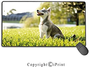 Stitched Edge Mouse pad,Alaskan Malamute,Klee Kai Puppy Sitting on Grass Looking Up Friendly Young Cute Animal Decorative,Multicolor,Premium Textured Fabric, Non-Slip Rubber Base,15.8