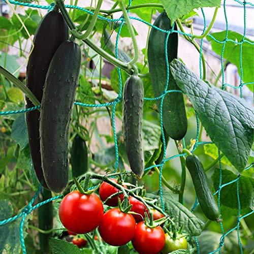 BED COTTON Ranknetz Premium mit Maschenweite(10 * 10cm), gewächshaus zubehör für den perfekten Wachstum von Gurken, Tomaten und Kletterpflanzen, Optimale Rankhilfe Netz für Garten – Größe 1.8 x 5m