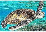 Julykai Desarrollar sabiduría Puzzles Puzzle para Adultos 1000 Piezas - Sea Turtle - DIYen Set Regalo Ideal Decoración hogar