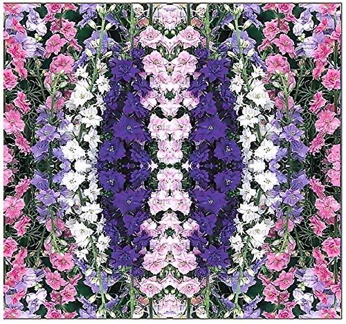 Big Pack - Rocket Larkspur Mix Flower Seed (12,000) - Delphinium ajacis - Flower Seeds By MySeeds.Co...