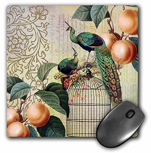 3dRose LLC 8 x 8 x 0.25 Vintage French Peacocks and Apricots on a Bird Cage Mouse Pad (mp_79353_1)