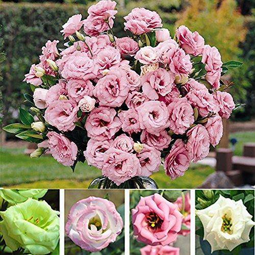 good01 50pcs Gemischte Farbe Dekorative Blumensamen Von Lisianthus Eustoma | Hausgarten-Yard, Der Bonsai-Blumensamen Pflanzt Eustoma Grandiflorum Samen