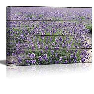 wall26 Canvas Wall Art - Purple Lavender Field on Vintage Wood Textured Background - Rustic Country Style Modern Giclee Print Gallery Wrap Home Decor Ready to Hang - 24  x 36