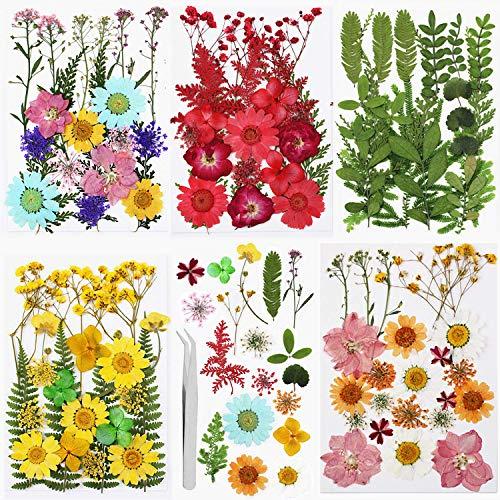 Echt Getrocknete Gepresste Blumen, Gemischte Getrocknete Blätter, Mehrfarbige Trocken Blume für DIY Harz Schmuck Nagel Handwerk Sammelalbum Dekorationen