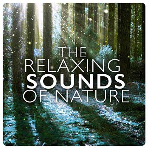 Natural Sounds, Nature Sound Collection & Nature Sounds