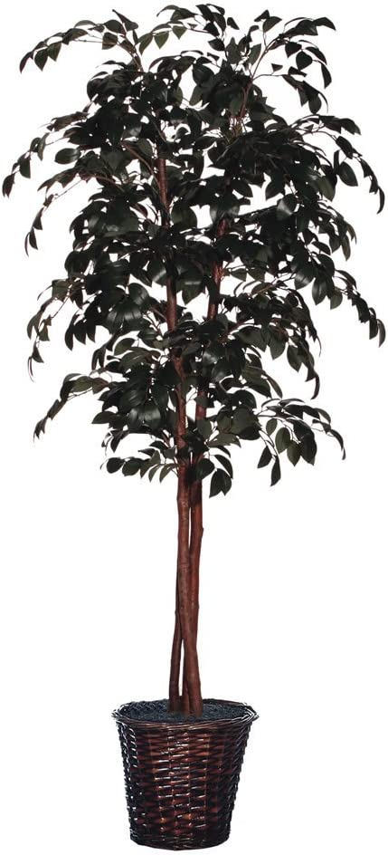 Vickerman Everyday 6' Indoor Cheap SALE Start Artificial Sakaki Nat Limited price sale Deluxe Tree -