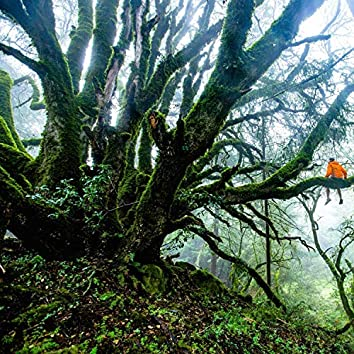 Jungle & Rain. Deep, Natural, Pure and Raw Sleep Sounds. Loopable with No Fade