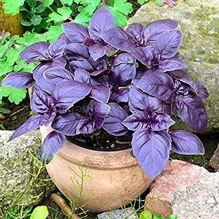 Best purple basil plant Reviews
