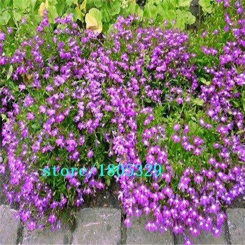 Vermelho: Lobelia Erinus Sementes 100 piezas Sementes De Flores Diy Nuevo hogar Jardim Bonsai Cor Da Mistura De Flores Bonitas Frete Gr & Aacute; Tis