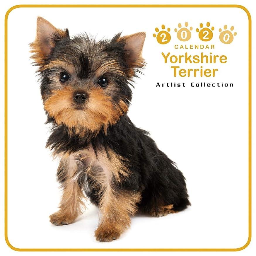 面倒新年シェルターカレンダー 2020 ミニサイズ 壁掛け ヨークシャ?テリア (ミニ) 403362 ノーマルレンズシリーズ 2019年9月-2020年12月 アーリスト イヌ いぬ Yorkshire Terrier