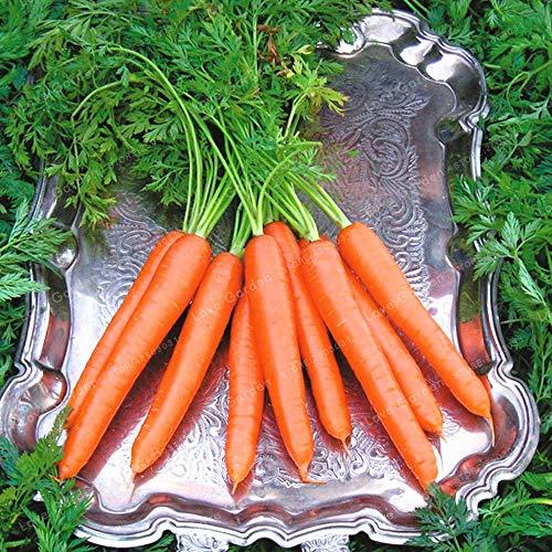 Bloom Green Co. 100 pcs/sac carotte bio Bonsai Heirloom Bonsai Fruits Légumes Pouces ginseng carotte Bonsai Plante en pot pour jardin