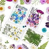 Xinstroe 125 flores secas reales prensadas hechas a mano, hojas secas naturales para decoración de flores