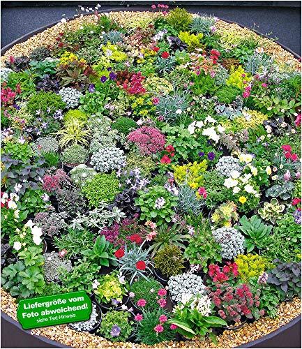 BALDUR-GartenSteingarten-Stauden-Mix 10 Pflanzen winterhart Grasnelke, niedrige Glockenblumen, leuchtendes Carex und attraktive Sedum-Arten
