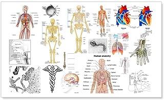 CafePress Human Anatomy Charts Wall Decal 20x12 Wall Decal, Vinyl Wall Peel, Reusable Wall Cling