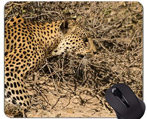 Gaming Mouse Pad Custom, Wildkatze Wild Leopard Rutschfeste Gummibasis Mousepad