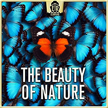 Beauty of Nature - Cheerful and Easygoing Acoustic Guitar Folk