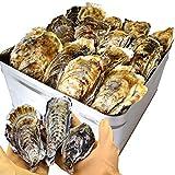 牡蠣 カンカン焼き セット 2kg(25~30個前後入) 冷凍牡蠣 桃こまち 鳥羽産 ミニ缶入(牡蠣ナイフ・片手用軍手付き)殻付き牡蠣 一斗缶 海鮮バーベキューセット プレゼント ギフト 旬凍桃こまち