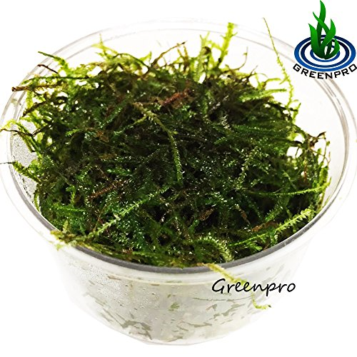 Greenpro Java Moss Live Freshwater Aquarium Plants Easy Ready to Grow
