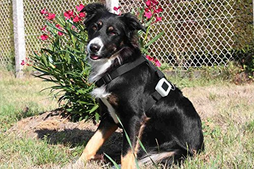 Weenect Pets - GPS-Halsband für Hunde Abbildung 2