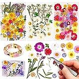 116 piezas Naturales Flores Prensadas Secas, Flor secas reales Mezclada Juego con pinzas, para Maquillaje Facial Uñas Decoración Tarjetas Velas Joyas jabón Manualidades