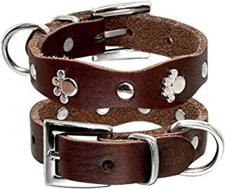 chihuahua leather collar