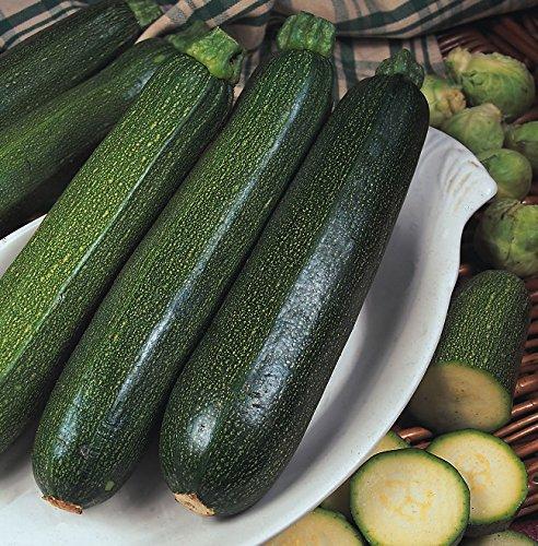 Courgettes - Tout Vert Buisson - 25 Graines