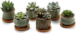 T4U Succulent Planter Pots Ceramic - Set of 6, Small Ceramic Succulent Pots Cactus Planters, Clay Pots with Drainage Window Boxes with Bamboo Tray, Green